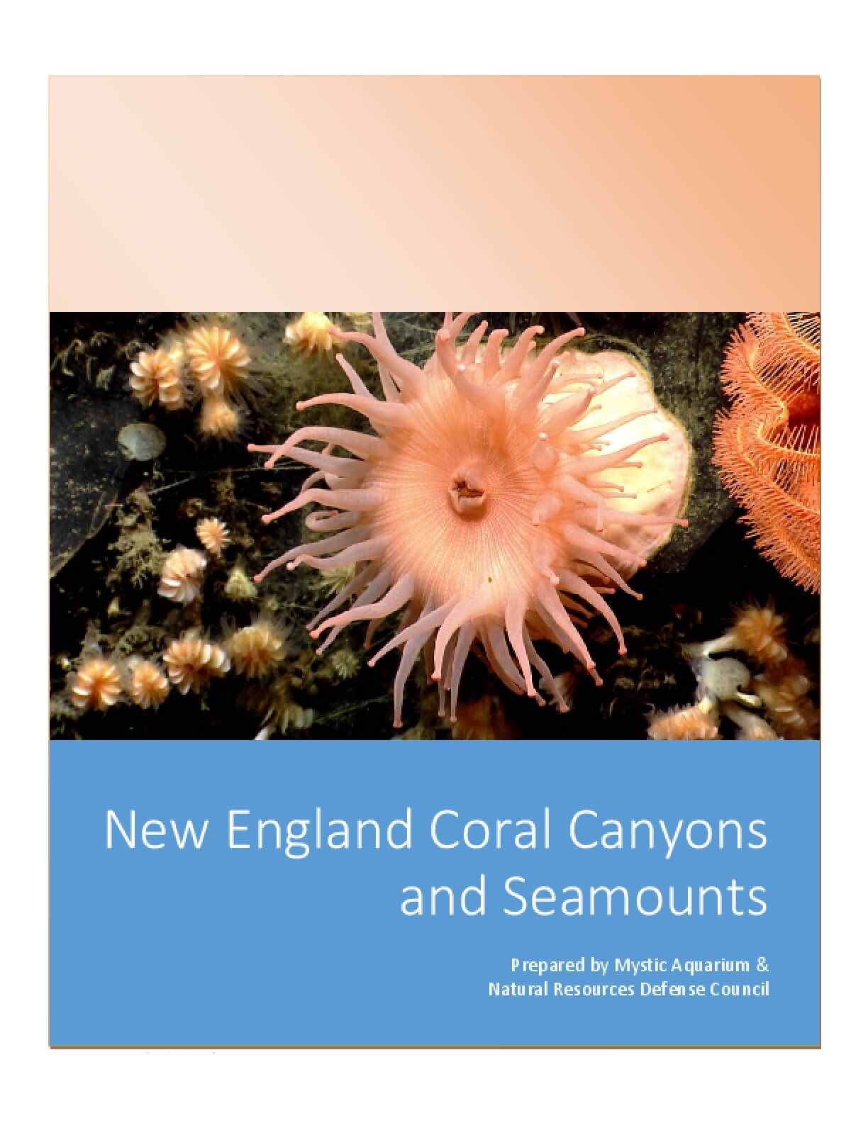 New England Coral Canyons and Seamounts